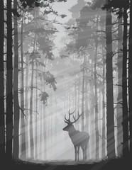 Fototapete - deer in the forest