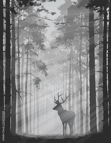 Wall mural deer in the forest