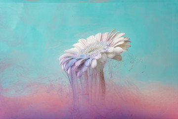 White daisy flower with pastel blue and pink ink. Creative abstract spring nature. Summer bloom concept.