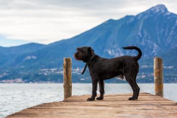 Black dog on shore of the lake, Italy