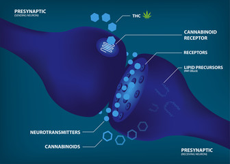 HOW AND WHY YOUR BRAIN MAKES ITS OWN CANNABINOIDS