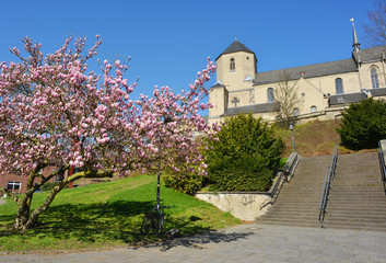 Mönchengladbach, Germany, Münster cathedral St Vitus in spring with magnolia tree