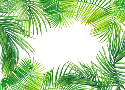 Frame of tropical green coconut palm leaves. Watercolor hand drawn painting illustration isolated on a white background.