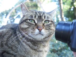 fotografiando un gato