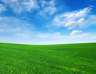 Wall Mural - Field and blue sky with white clouds