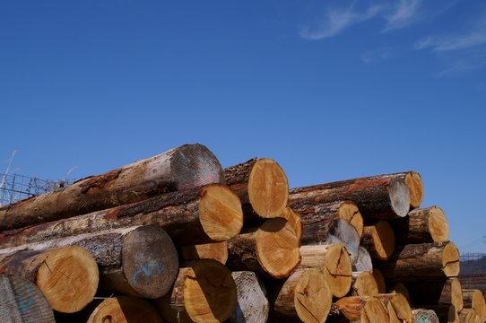 wood log Cut end