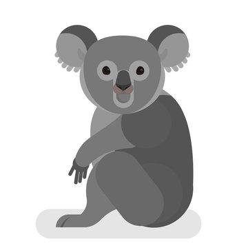 Koala with grey fur