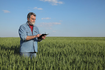 Agriculture, farmer examining wheat field using tablet