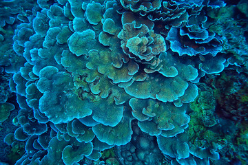 Printed kitchen splashbacks Macro photography coral reef macro / texture, abstract marine ecosystem background on a coral reef