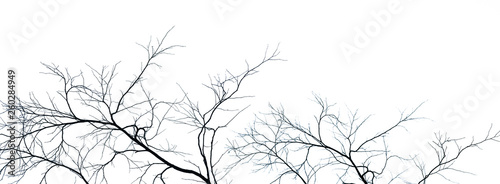 Dead Tree And Branch Isolated On White Background Black Branches Of