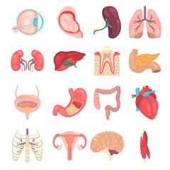 Human anatomy color vector icon set. Flat design