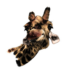 giraffe head funny expression muzzle funny, sketch vector graphics color illustration on white background