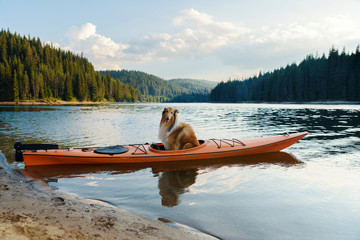 Scottish shepherd in an orange kayak in a lake during the summer sunset in the mountain Selective focus