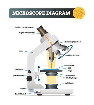 Microscope diagram vector illustration. Labeled zoom instrument structure.