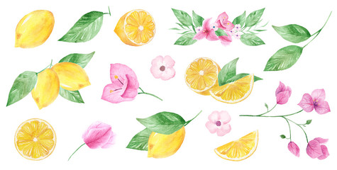 Watercolor hand painted collection of lemon and flower. Can be used for printing and decoration.