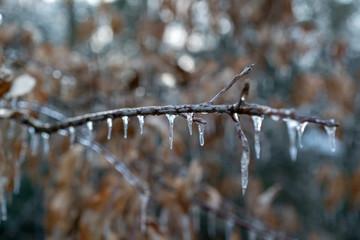 Ice Branch