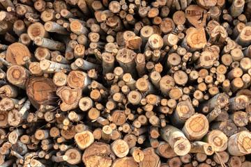 Photo sur Aluminium Texture de bois de chauffage Background of various sizes of eucalyptus logs.