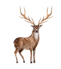 Hand painted watercolor deer isolated on white background