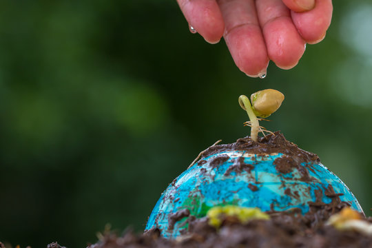 People hands watering young seeding plant on Globe model on raining suny day green background. Save Green world Environment ecology day. Life on earth, new development for business leadership concept