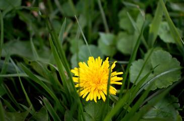 flower Flor Campo yellow amarilla