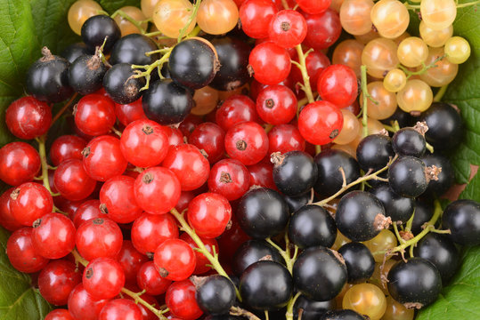 Currant. Background of black and red currants. Fresh berries. Top view. Background of fresh berries. Various fresh summer fruits, red and black.