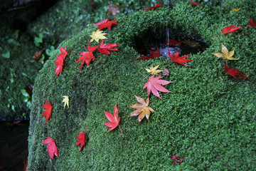 The moss garden in Kyoto