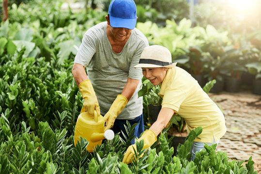 Cheerful seniors watering plants