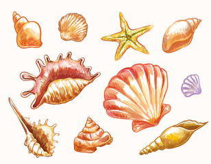 Vector seashells in sketch watercolor style isolated