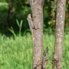 lizard on tree trunk