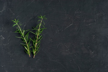 Fresh rosemary herb on the dark background. Top view rosemary