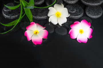 spa composition of plumeria flowers and green leaves on black zen stones in water
