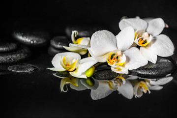 spa concept of white orchid (phalaenopsis) and black zen stones with drops on water with reflection