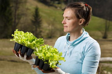 Woman gardener watching her lettuce seedlings prepared to be planted on her garden.