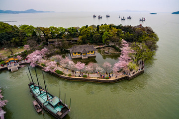 Cherry blossoms forest photographed by UAV, at Wuxi.