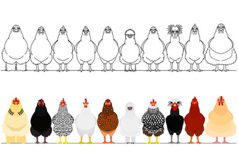 various chicken in a row
