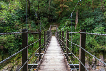 A suspension bridge crossing a river in lush rainforest on the southern island of Yakushima, Japan