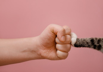 fist hand and cat paw on pink background standoff of animals and people