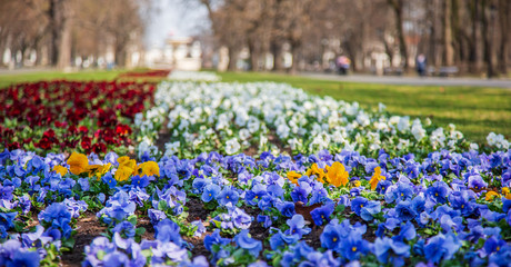 Warsaw, Poland - April 3, 2019: Beautiful Saxon garden, park with red, blue and white flowers.
