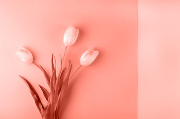 Aluminium Prints Manicure Fresh tulips on a paper background in coral color.