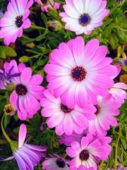Flores silvestres rosas y blancas