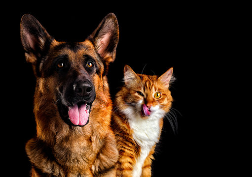 dog and cat on black background