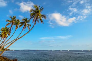 Paradise tropical landscape with palm trees swaying over the sea, Maui, Hawaii, USA
