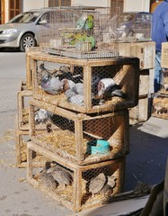 Vogelverkauf auf dem Markt