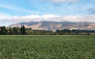 Farm field in Canterbury, New Zealand