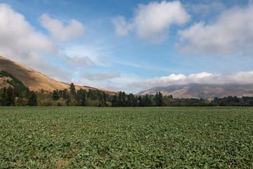 Farm filed in New Zealand