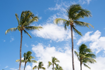 Tropical palm trees against the blue sky with scattered white clouds.