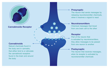 HOW AND WHY YOUR BRAIN MAKES ITS OWN CANNABINOIDS ENDOCANNABINOID SYSTEM
