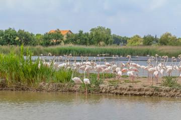 Regional Nature Park of the Camargue