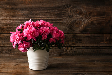 In de dag Azalea Pot with beautiful blooming azalea on wooden background