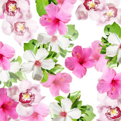 Fototapete - Beautiful floral background of hibiscus and orchids. Isolated